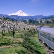 Spring Events in the Portland Metro Area